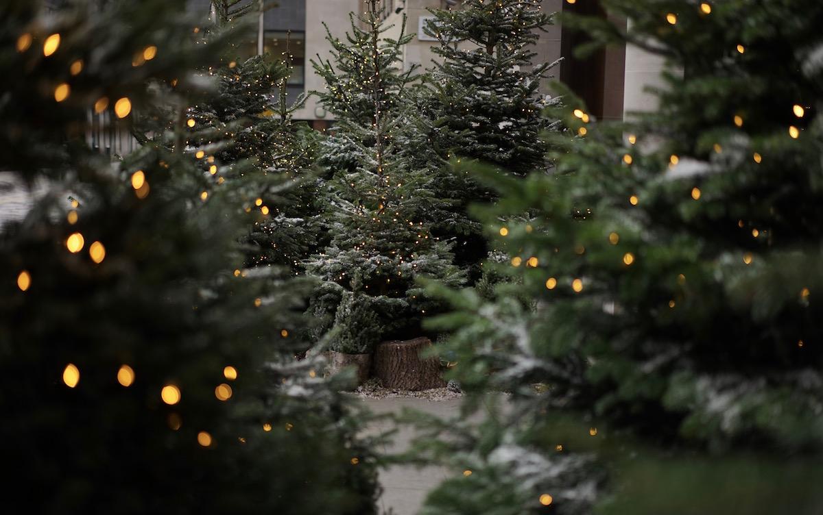 St Jamess Market Christmas Trees Advent Calendar